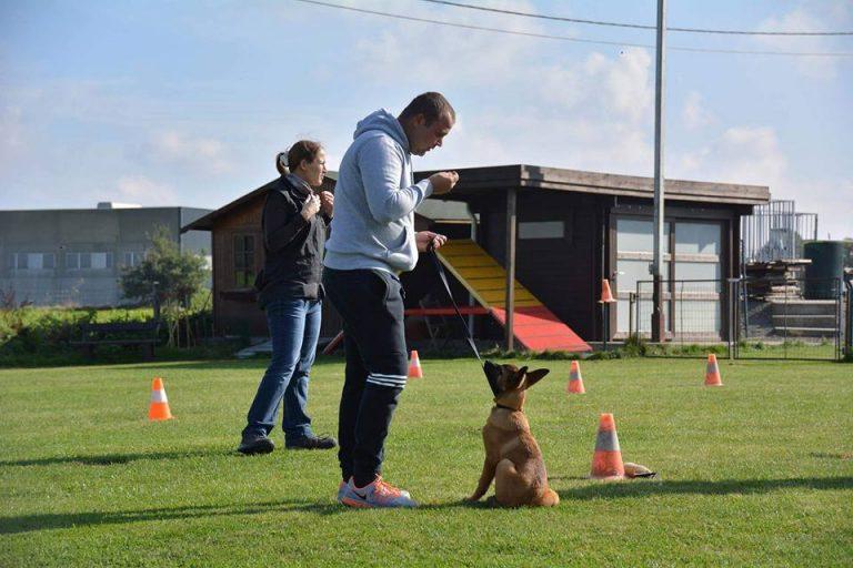 Agility - Hondenschool de wijze hond