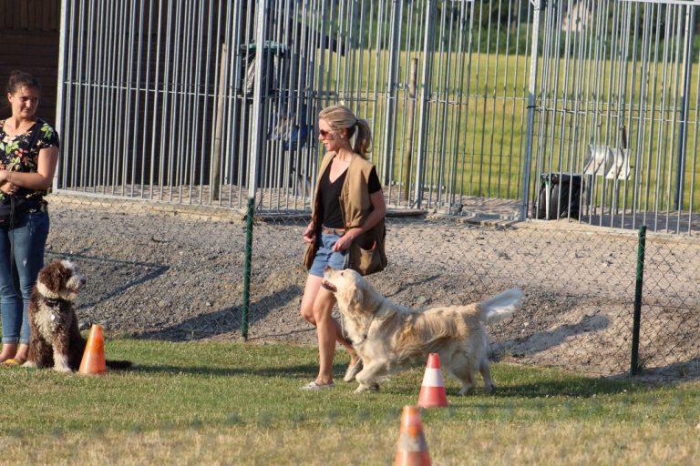 Gehoorzaamheid De Wijze Hond