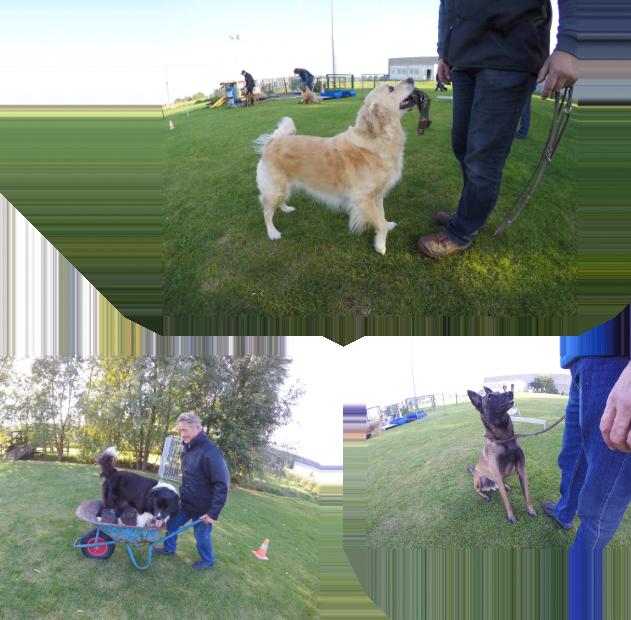 Hondenschool De Wijze Hond is een hondenschool waar u terecht kunt met elke hond. Of u nu puppytraining wil volgen, uitblinken in behendigheid of hogerop in de hondensport wilt behoren.